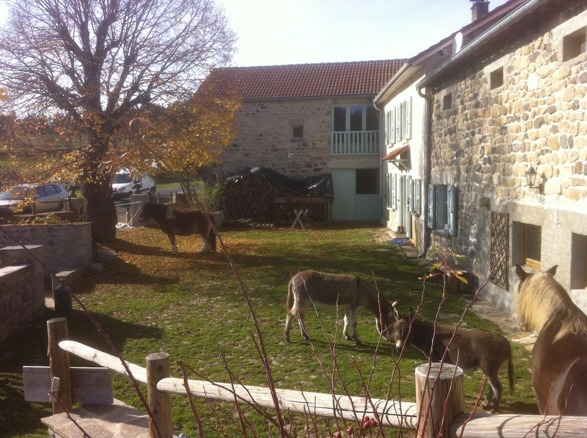 chevaux et ânes dans notre cour, novembre 2015